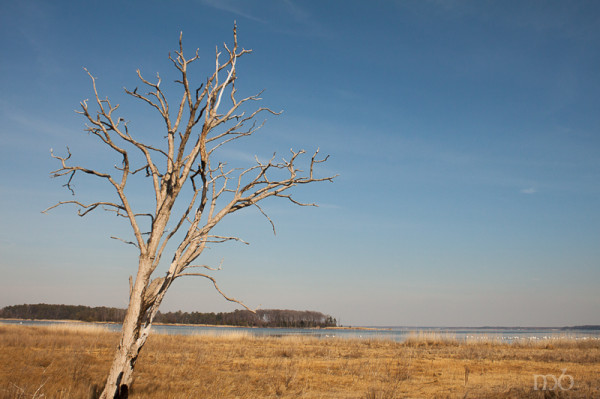 Salt Marsh - Eastern Neck