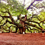 The Angel Oak in Charleston &#8211; Oldest Living Thing in the East